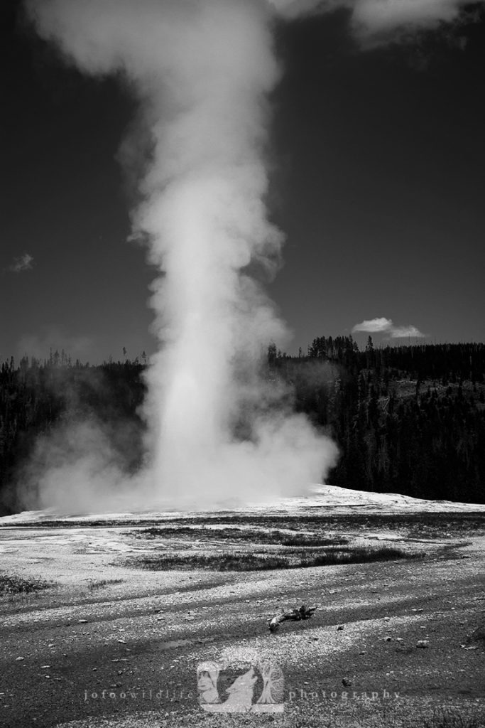Black and white photo of the famous geyser Old Faithful erupting with a large stream of steam.