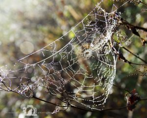 A photo of a spider's web with waterdroplets of morning dew on it in bright, warm morning light