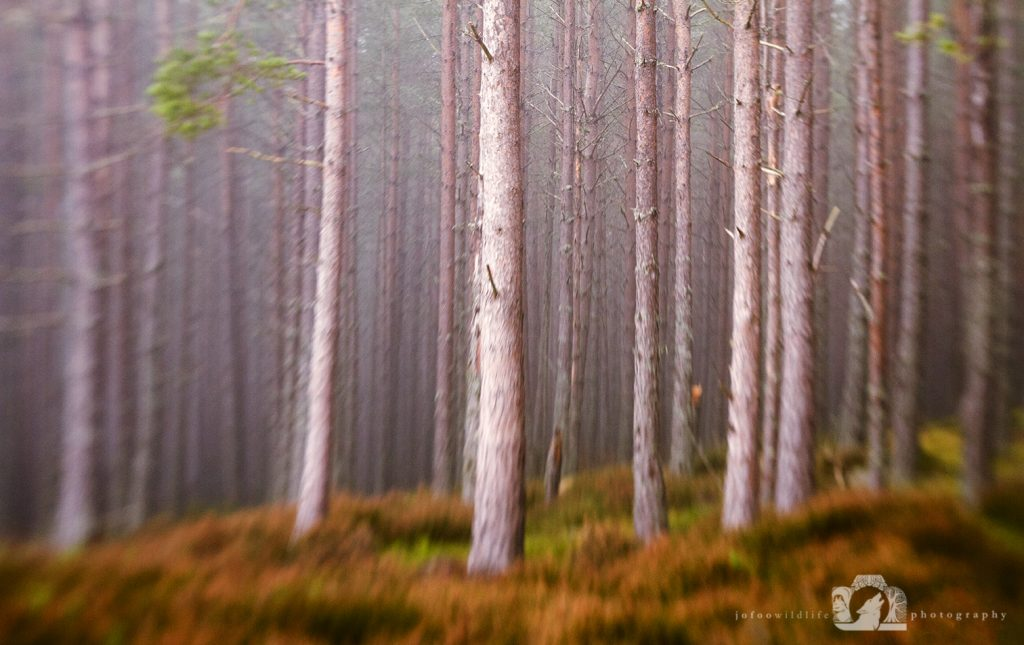 Wild Woods