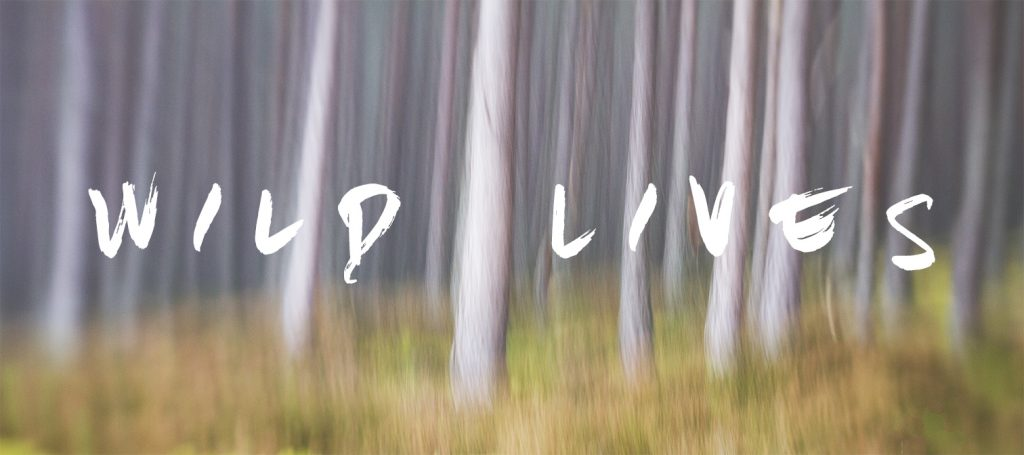 Wild Lives Banner - trees