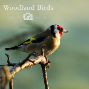"Image of a goldfinch with the text ""Woodland Birds"" beside it."