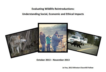Title page of my WCMT report. Three photos on a white background - wolf, wildlife watchers, bear