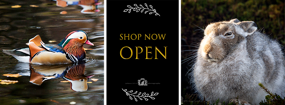 """A mandarin duck in the water on the left. A mountain hare on the right. And a black panel in the middle that reads """"shop now open"""" in gold."""